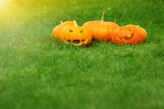 Pumpkins for halloween on green grass background Stock Images