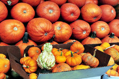 Pumpkins in Halloween Holiday Royalty Free Stock Image