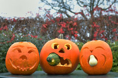 Pumpkins for Halloween Stock Image