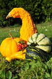 Pumpkins. Halloween Royalty Free Stock Images