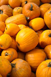 Pumpkins for Halloween ready for sale Royalty Free Stock Photos