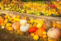 Pumpkins Royalty Free Stock Image