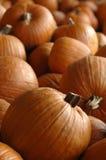 Pumpkins after harvest Stock Images