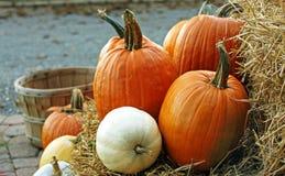 Pumpkins at harvest. A goup of pumpkins on a hay bale Stock Photos