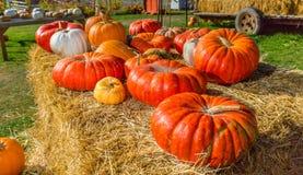 Pumpkins Harvest Royalty Free Stock Image