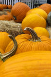 Pumpkins at Harvest Time Stock Photo