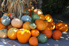 Pumpkins at Harvest Time. Stock Photos