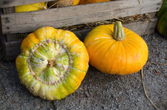 Pumpkins harvested Stock Image