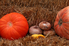 Pumpkins in The Hay. Close up of several colorful orange, green and yellow pumpkins in some hay Stock Photography