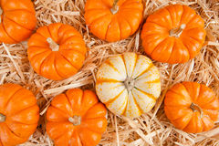 Pumpkins on hay Royalty Free Stock Image