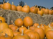 Pumpkins on hay. Lots of pumpkins sitting on top of bales of hay stock photo