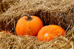 Pumpkins in Hay Royalty Free Stock Images