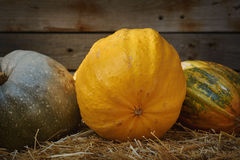 Pumpkins on a Hay Stock Image