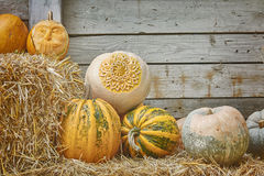 Pumpkins on a Hay. Against the Wooden Background Royalty Free Stock Images
