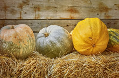 Pumpkins on a Hay. Against the Wooden Background Royalty Free Stock Photo