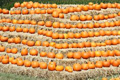 Pumpkins and hay Bails. These pumpkins just taken from the field and line up on hay bails at a nearby New England Farm royalty free stock photos