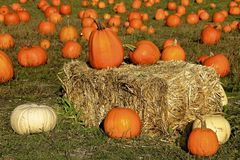 Pumpkins on a hay bale royalty free stock photo