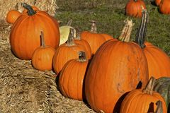 Pumpkins on a hay bale royalty free stock photography