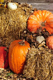 Pumpkins on hay bales at harvest time Royalty Free Stock Images