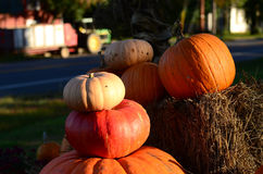 Pumpkins on Hay Stock Image