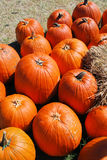 Pumpkins and hay in the sun Royalty Free Stock Photography