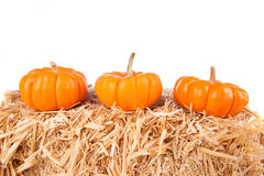 Pumpkins on hay with white background Royalty Free Stock Photo