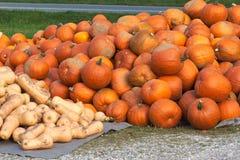 Pumpkins for Helloween on the roadside Stock Photos