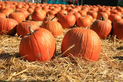 Pumpkins With High DOF in a Hay Field Stock Images