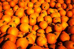 Pumpkins. Huge pile of orange pumpkins royalty free stock image
