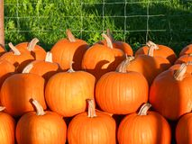 Pumpkins II Stock Photography