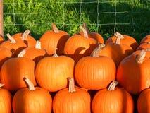 Pumpkins II Stock Photography