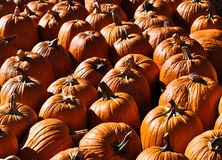Pumpkins. An image of a group of pumpkins Stock Images