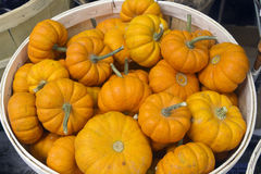 Free Pumpkins In A Basket Royalty Free Stock Images - 32125659