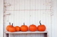 Pumpkins In A Row Stock Photos