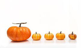 Pumpkins In A Row Royalty Free Stock Images