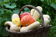 Free Pumpkins In The Basket Stock Photography - 15879002