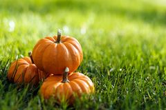 Free Pumpkins In The Field Stock Image - 127556641