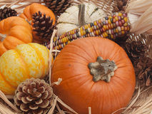 Pumpkins and Indian corn Royalty Free Stock Image