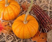 Pumpkins and Indian corn Royalty Free Stock Photography