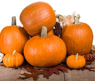 Pumpkins indian corn and fall leaves Royalty Free Stock Photos