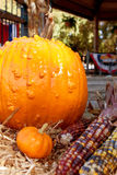 Pumpkins And Indian Corn Make Colorful Autumn Display Royalty Free Stock Photography