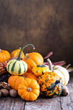 Pumpkins, indian corn and variety of squash Stock Photography