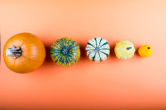 Pumpkins isolated on orange background Stock Photography