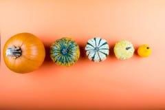 Pumpkins isolated on orange background. Fresh pumpkins isolated on orange background Stock Photography