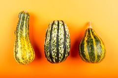 Pumpkins isolated on orange background Royalty Free Stock Photos