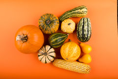 Pumpkins isolated on orange background Royalty Free Stock Images