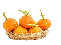 Pumpkins isolated on white background with clipping path Stock Image