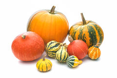 Pumpkins isolated on a white background Royalty Free Stock Photography