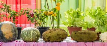 Pumpkins and jackfruits Stock Images