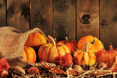 Pumpkins jute bag Stock Images